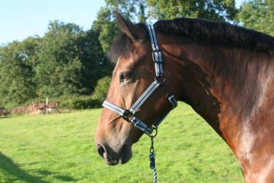 Nylon Headcollar with Leadrope
