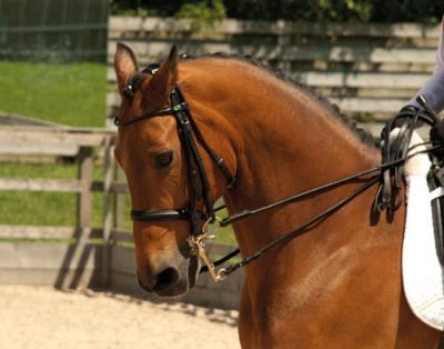 Rhinegold German Leather Rolled Double Bridle